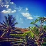 ★【バリ島 ホテル】〜道〜道の先には何がある?〜番外編〜 【Michi Retreat Ubud Bali】